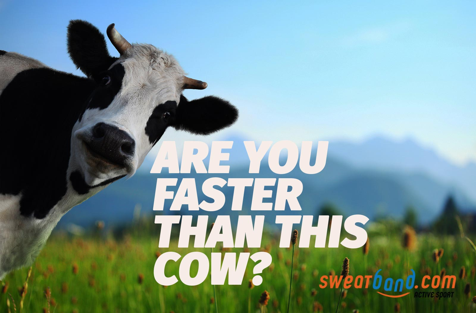 Can you run faster than a cow?