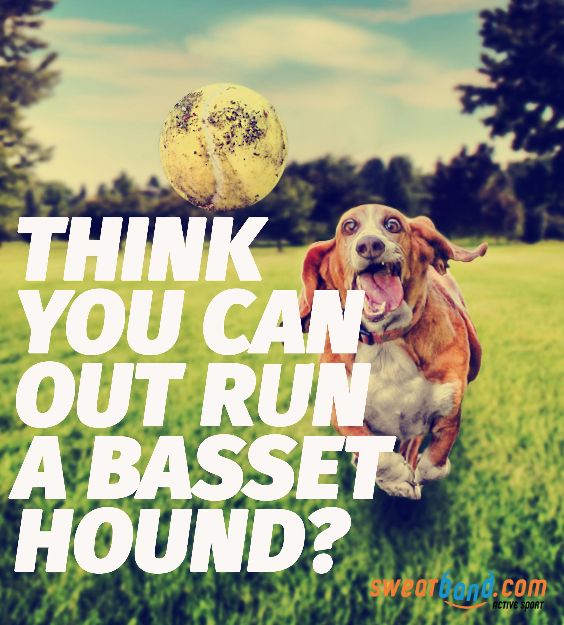 Can you run faster than a dog? If not, what animals could you outrun?